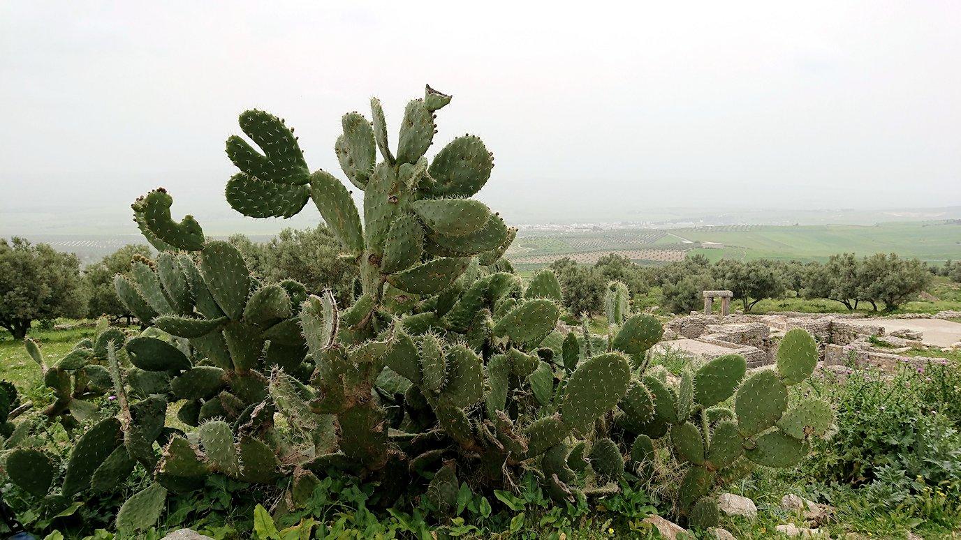 チュニジアのドゥッガ遺跡を満喫4