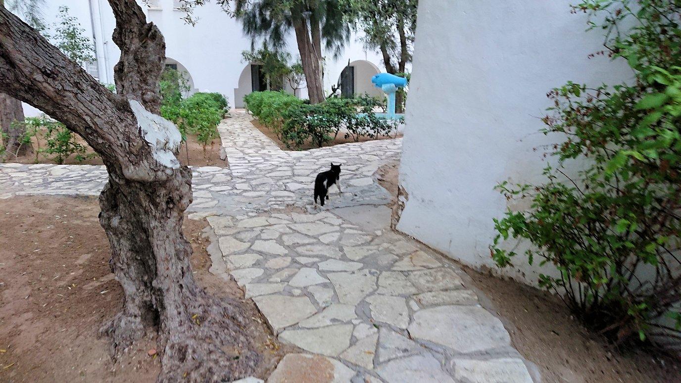 チュニジア:スースのホテルで朝日を楽しみにホテル内を散策4