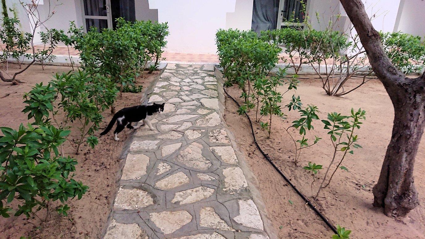チュニジア:スースのホテルで朝日を楽しみにホテル内を散策6