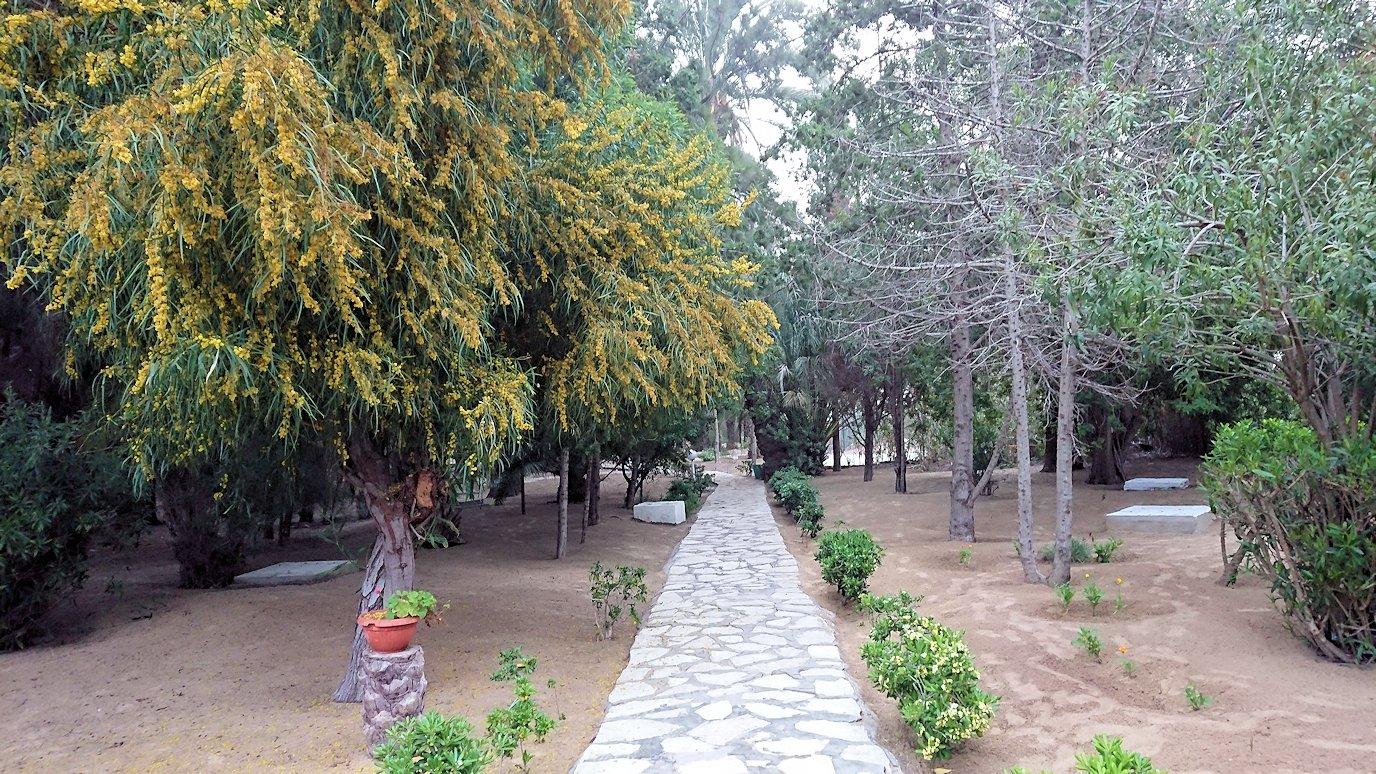 チュニジア:スースのホテルで朝日を楽しみにホテル内を散策