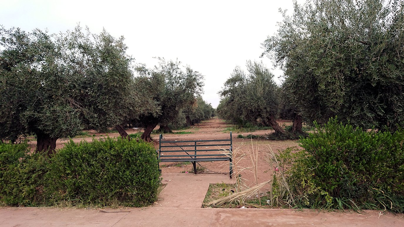 マラケシュのメナラ庭園に入って観光を1