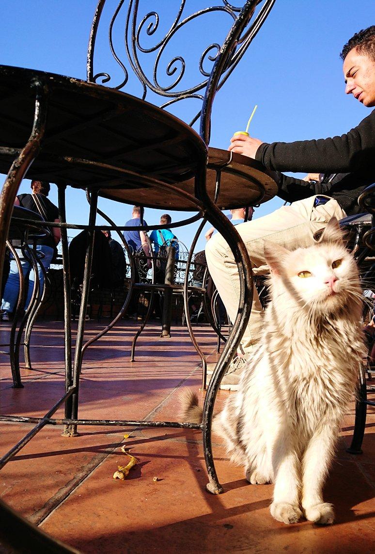 モロッコ・マラケシュでジャマ・エル・フナ広場のカフェで休憩9