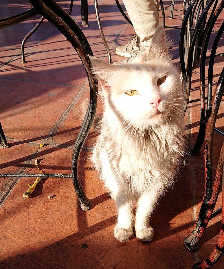 モロッコ・マラケシュでジャマ・エル・フナ広場のカフェを満喫
