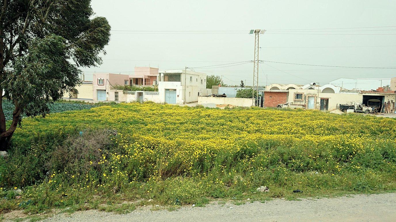 チュニジア:ナブールからケリビアに向かう道中の景色1