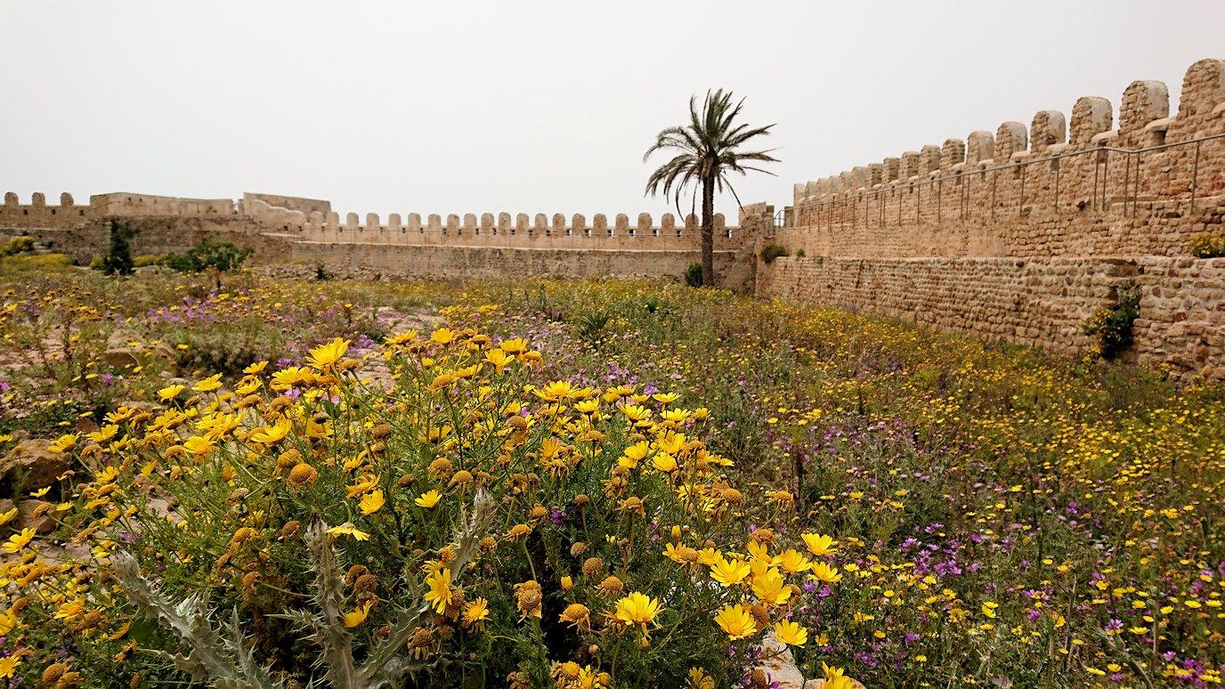 チュニジア:ケリビアの城塞跡内で咲き誇るのは?