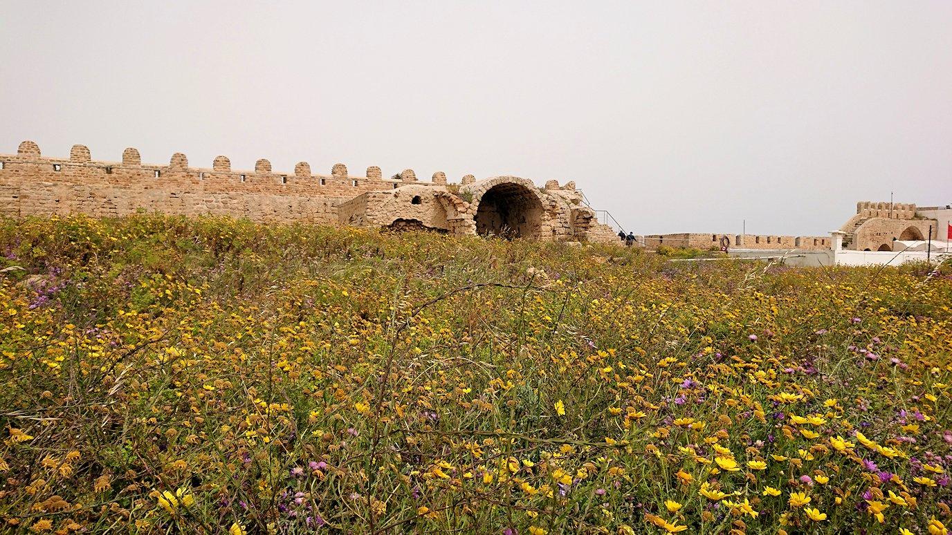 チュニジア:ケリビアの城塞跡内で咲き誇るのは?3