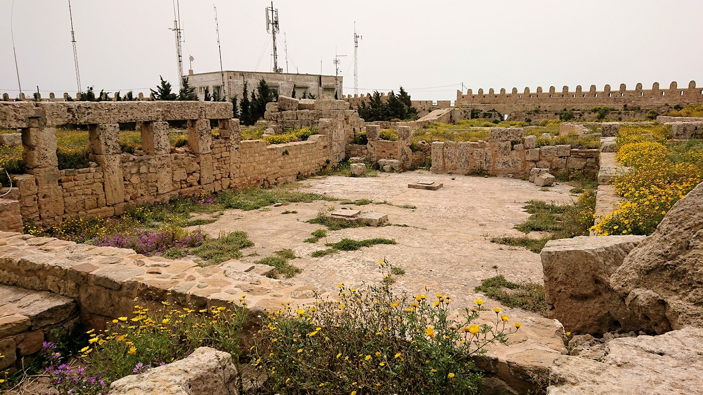 チュニジア:ケリビアの城塞跡内で咲き誇るのは?4