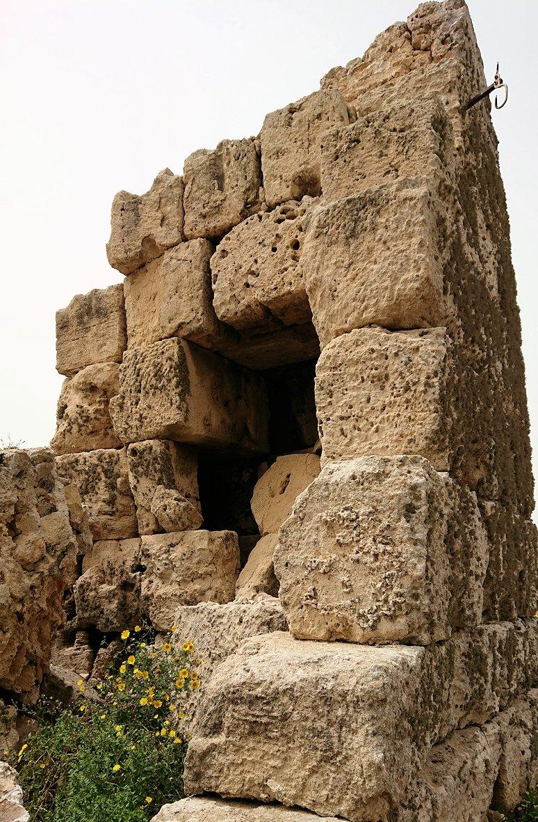 チュニジア:ケリビアの城塞跡内で咲き誇るのは?5