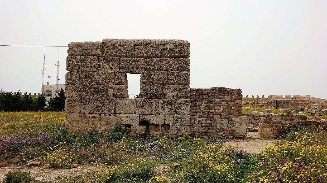 チュニジア:ケリビアの城塞跡内で咲き誇るのは?6