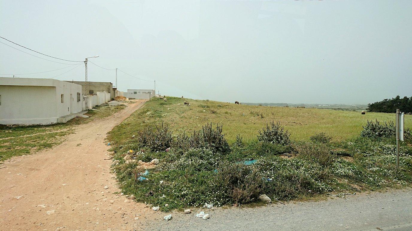 チュニジア:ボン岬のレストランに向かう2
