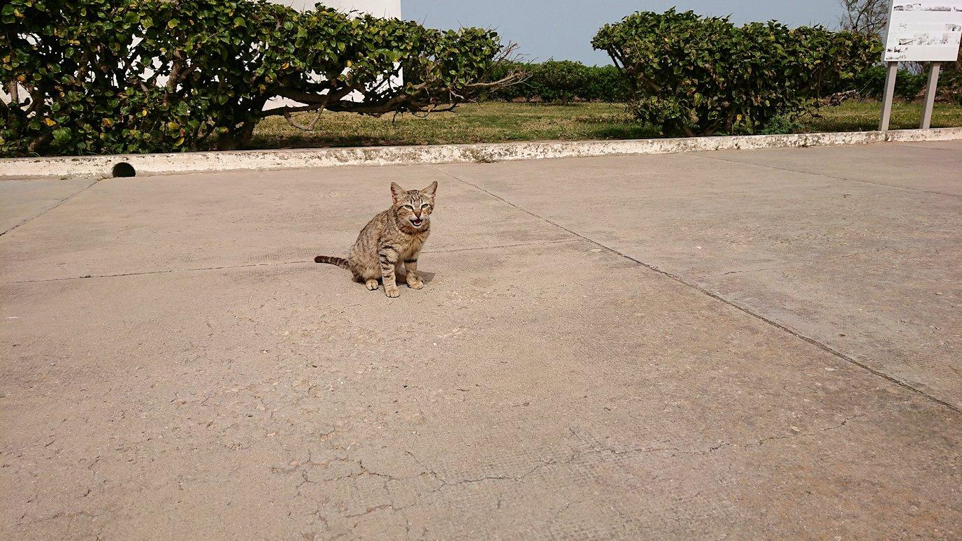 チュニジア:ボン岬のケルクアン遺跡に入場7