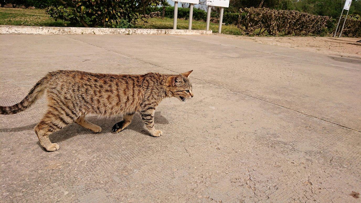チュニジア:ボン岬のケルクアン遺跡に入場8