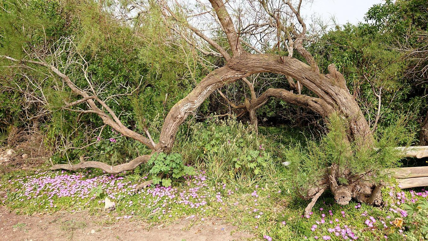 チュニジア:ボン岬のケルクアン遺跡内を進んで行く4