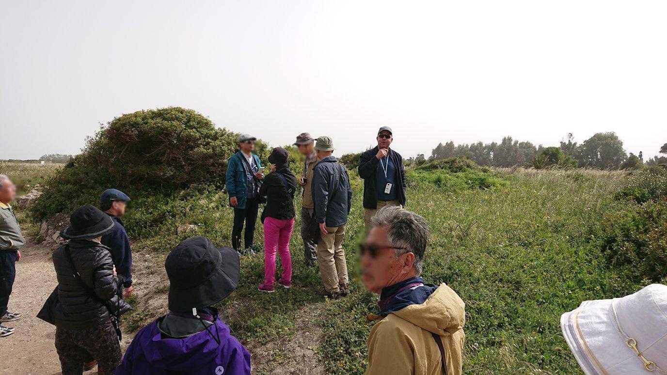 チュニジア:ボン岬のケルクアン遺跡を観光3
