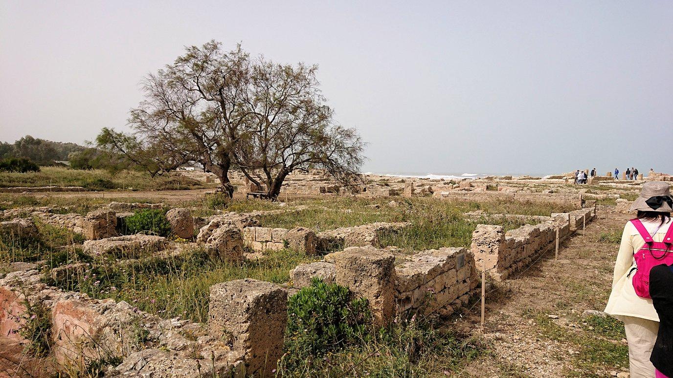 チュニジア:のケルクアン遺跡の散策はまだまだ続く4