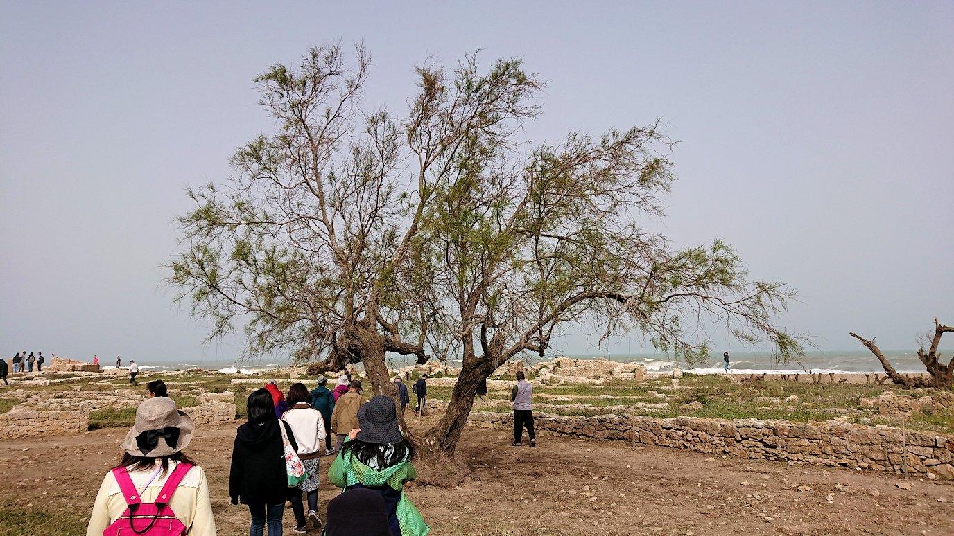 チュニジア:のケルクアン遺跡の散策はまだまだ続く5