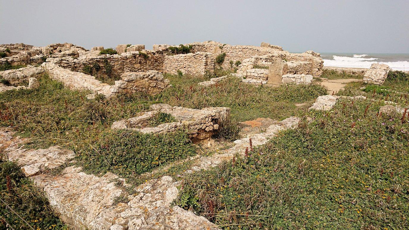 チュニジア:のケルクアン遺跡の散策はまだまだ続く6