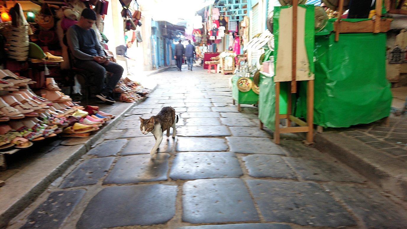 チュニジア:チュニスのメディナ自由時間に散策した景色5