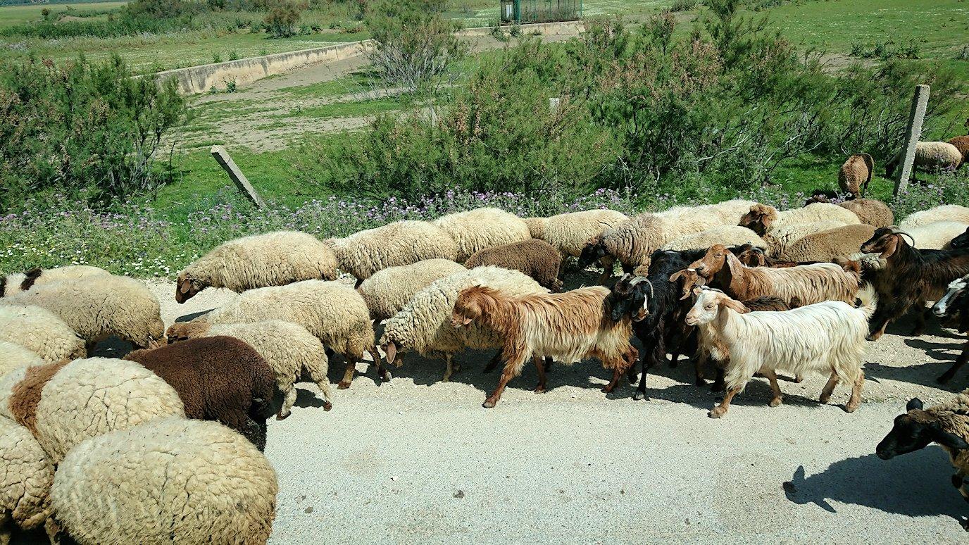 チュニジア:チュニスからイシュケウル国立公園の近くに来る8
