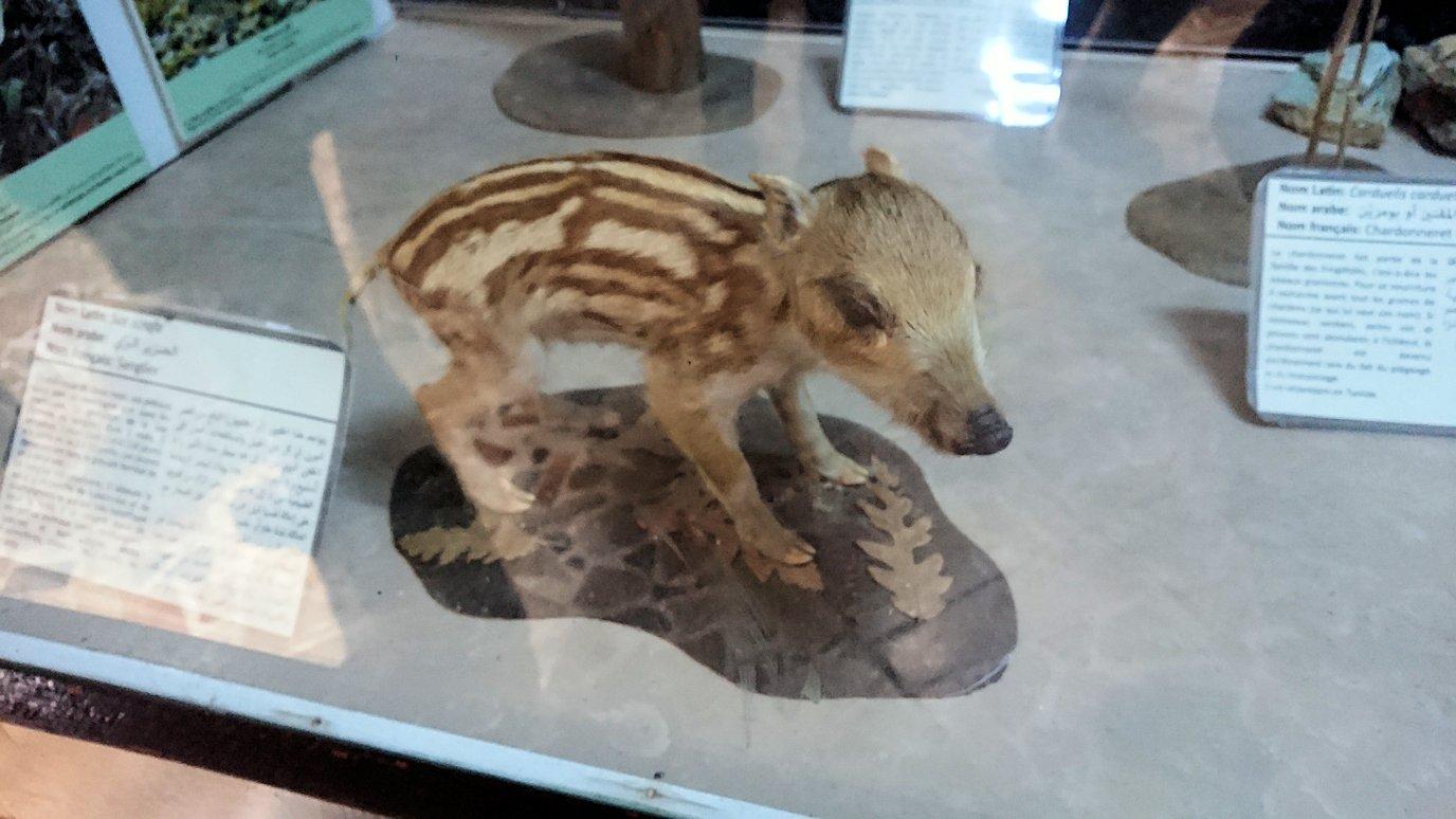 チュニジア:イシュケウル国立公園の頂上の自然博物館での様子5