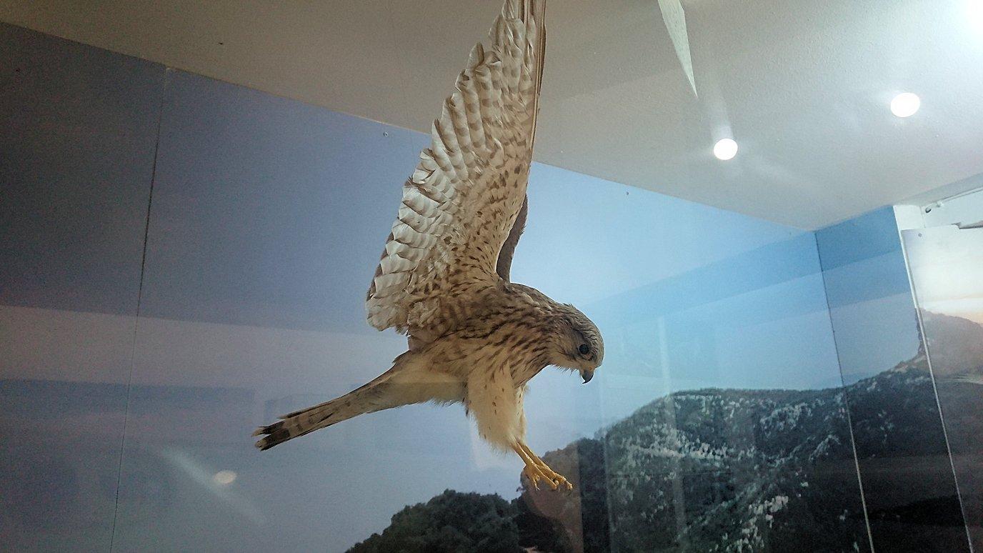 チュニジア:イシュケウル国立公園の頂上の自然博物館での様子6
