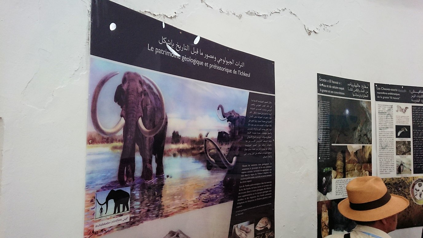 チュニジア:イシュケウル国立公園の頂上の自然博物館での様子8