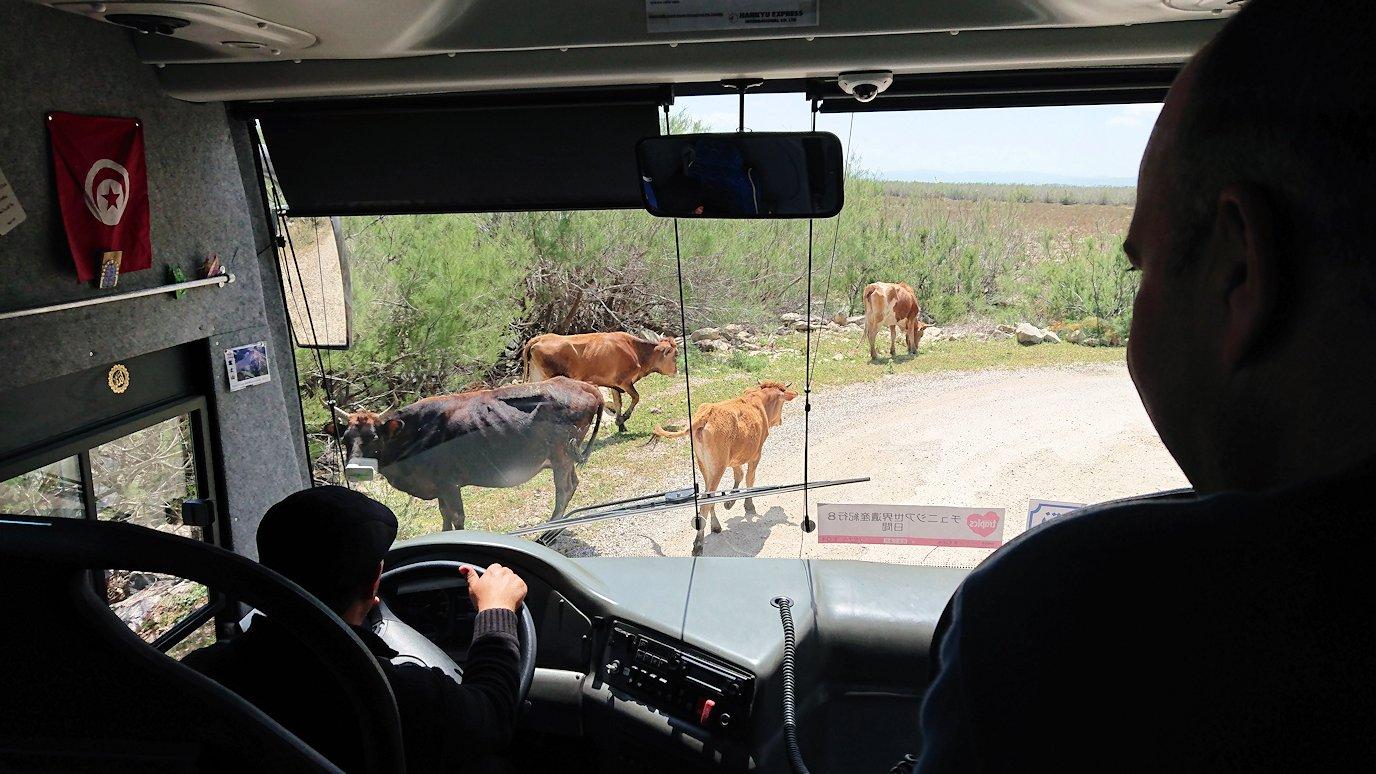 チュニジア:イシュケウル国立公園でくつろぐ1