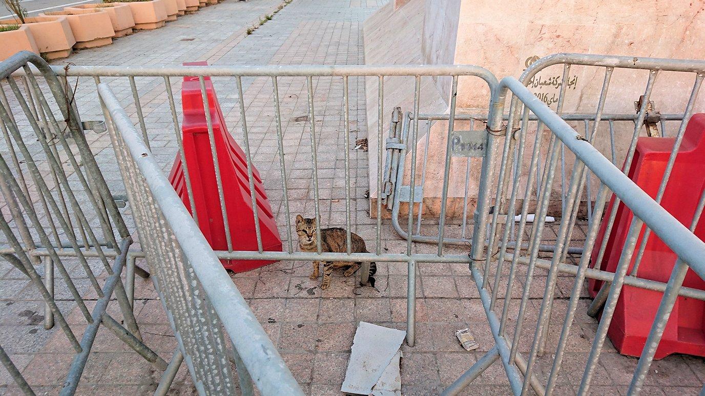 チュニジア:チュニスの朝を散歩4