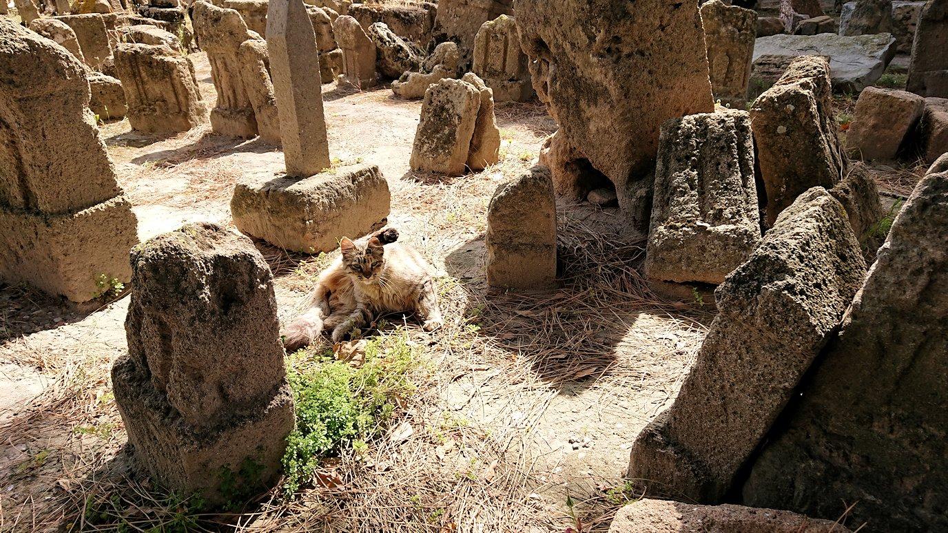 チュニジア:カルタゴ遺跡のトフェ(タニト神の聖域)に向かう5