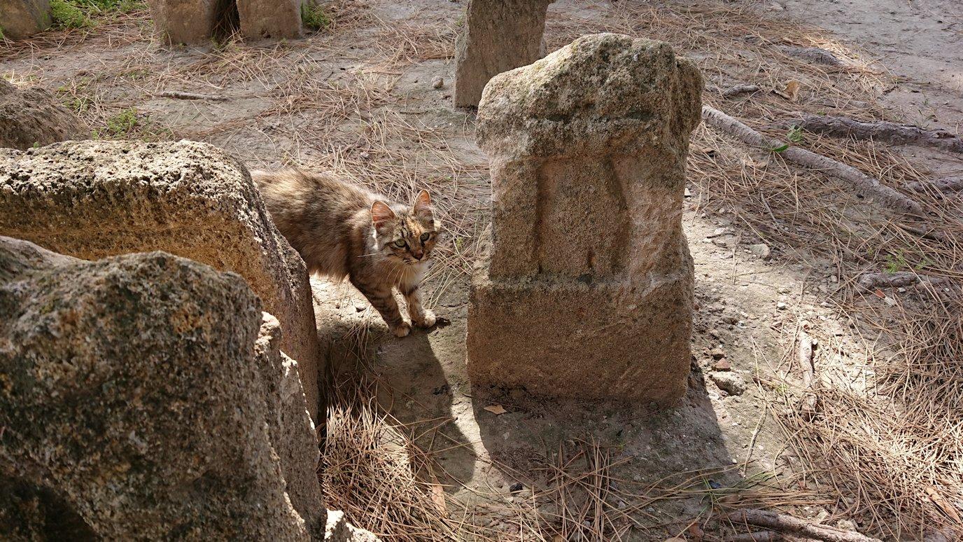 チュニジア:カルタゴ遺跡のトフェ(タニト神の聖域)に向かう7