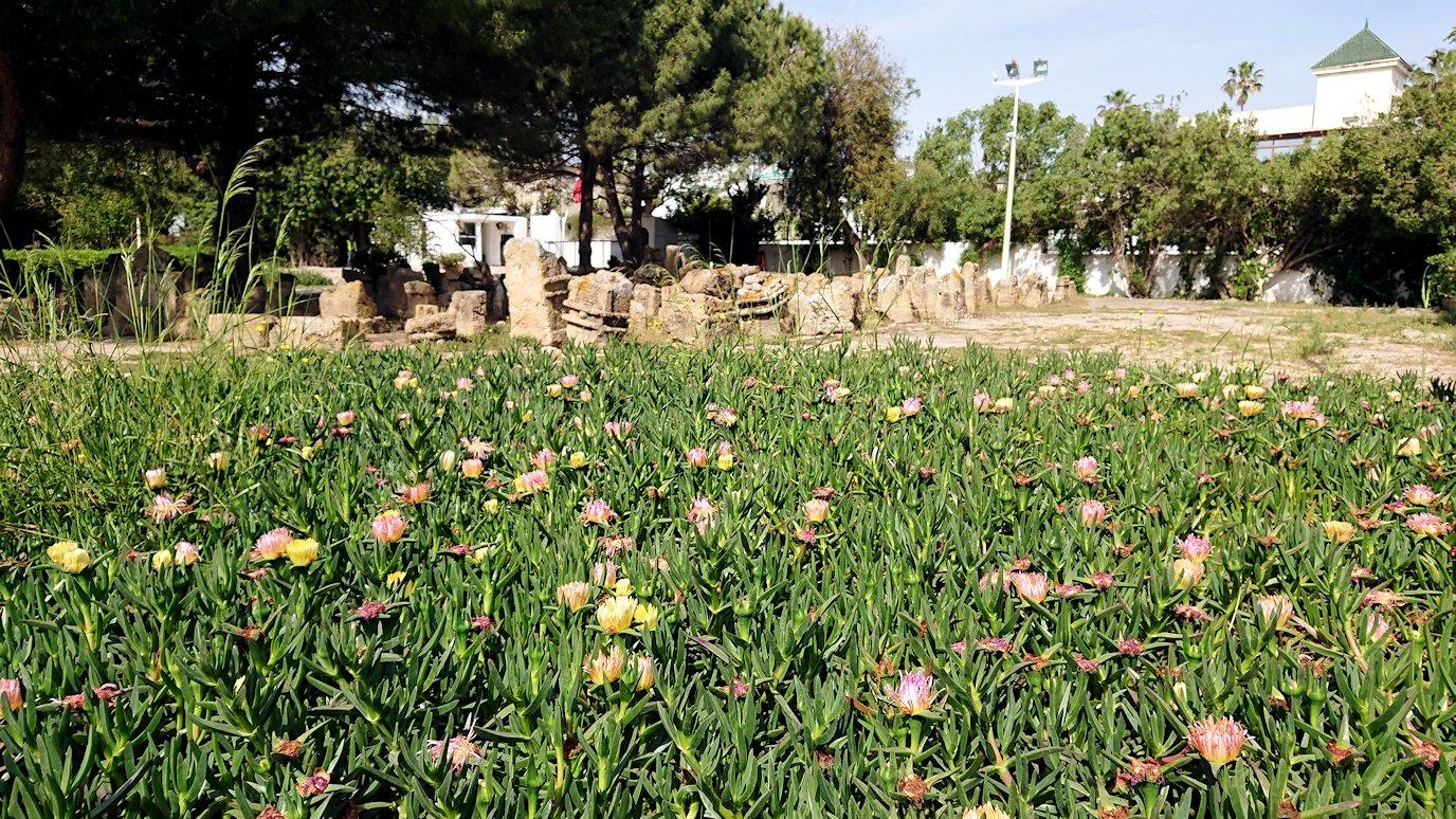 チュニジア:カルタゴ遺跡のトフェ(タニト神の聖域)を見学9