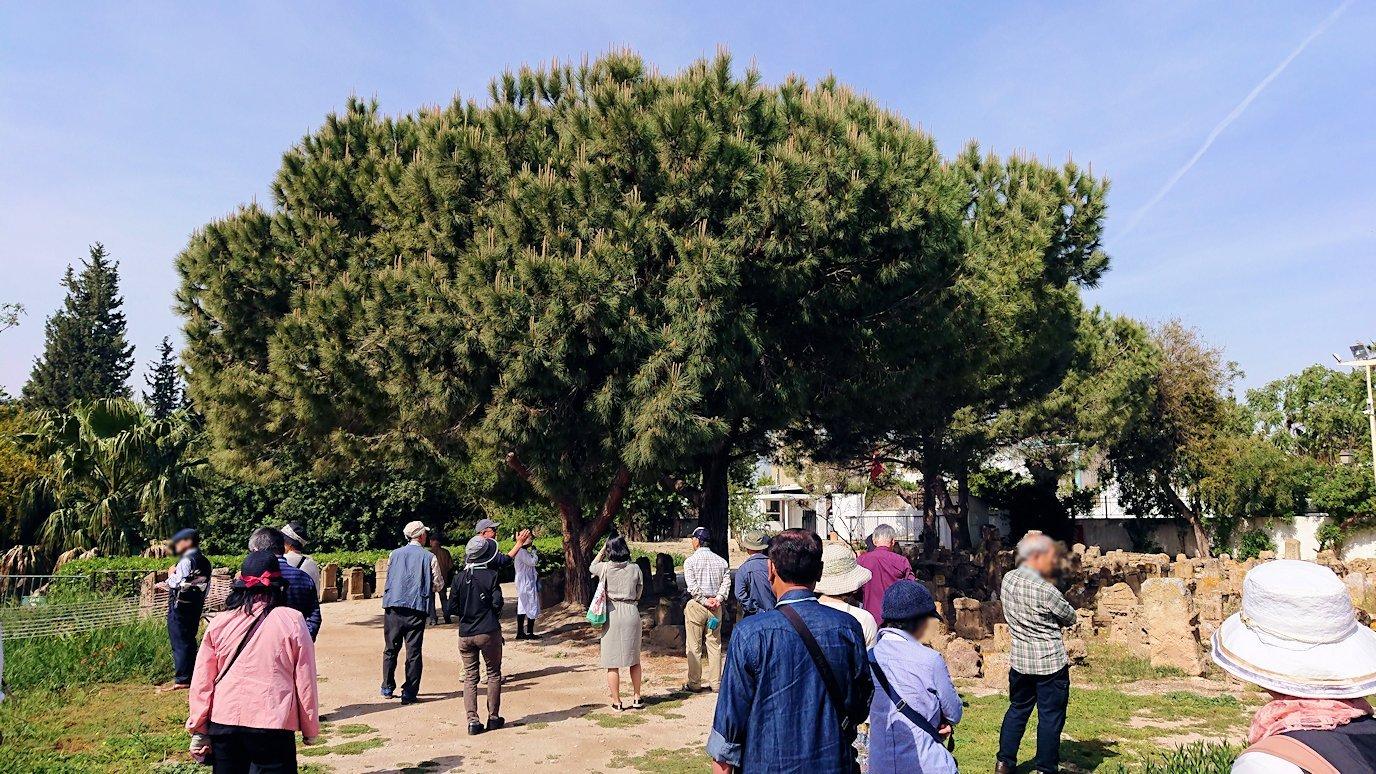 チュニジア:カルタゴ遺跡のトフェ(タニト神の聖域)を散策3