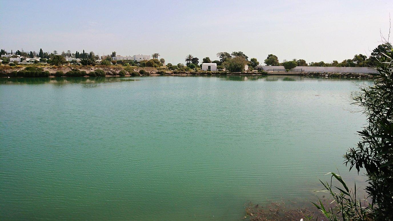 チュニジア:カルタゴ遺跡のトフェ(タニト神の聖域)近くの湖にて