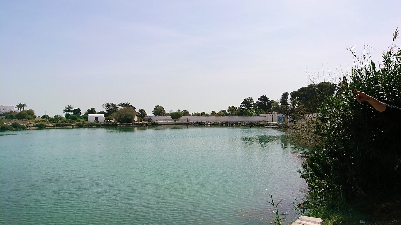 チュニジア:カルタゴ遺跡のトフェ(タニト神の聖域)近くの湖にて3