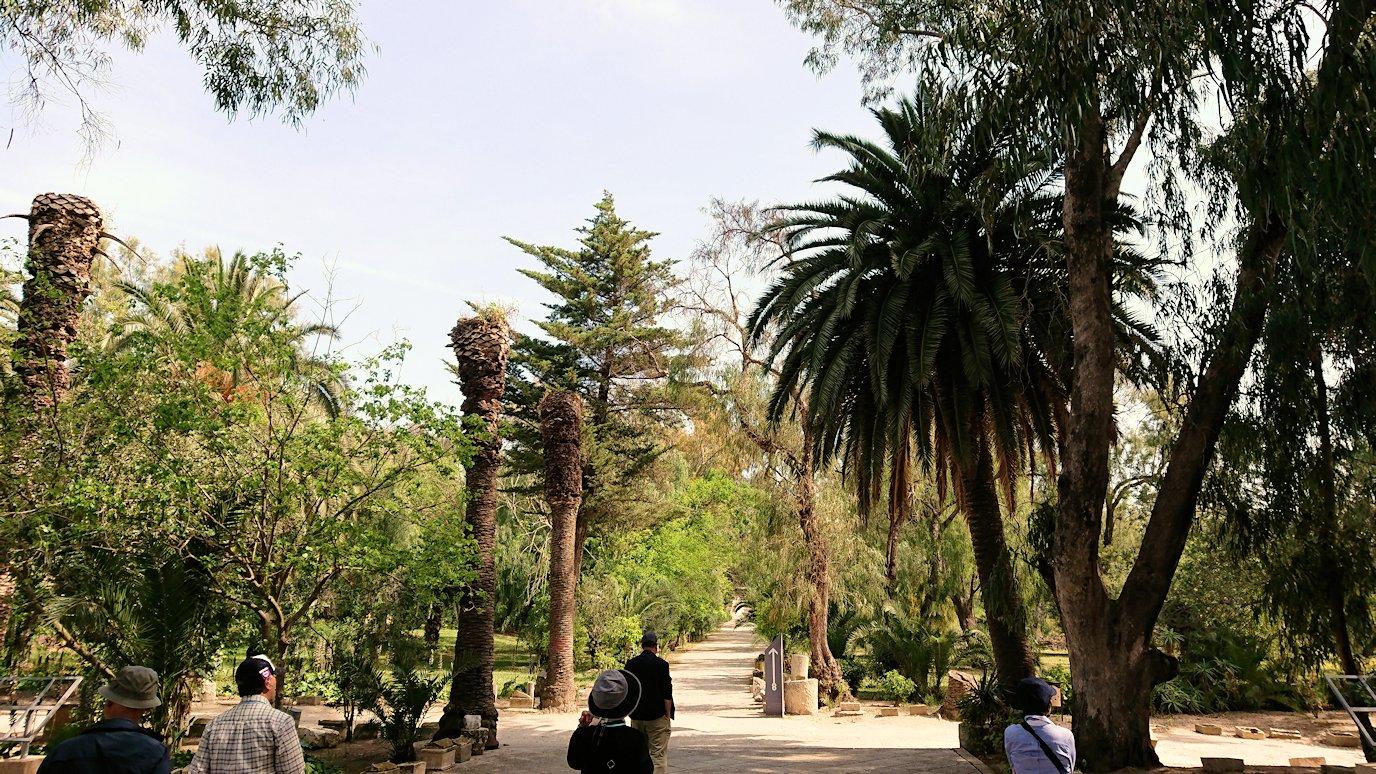 チュニジア:カルタゴ遺跡のアントニヌスの共同浴場へ向かう6