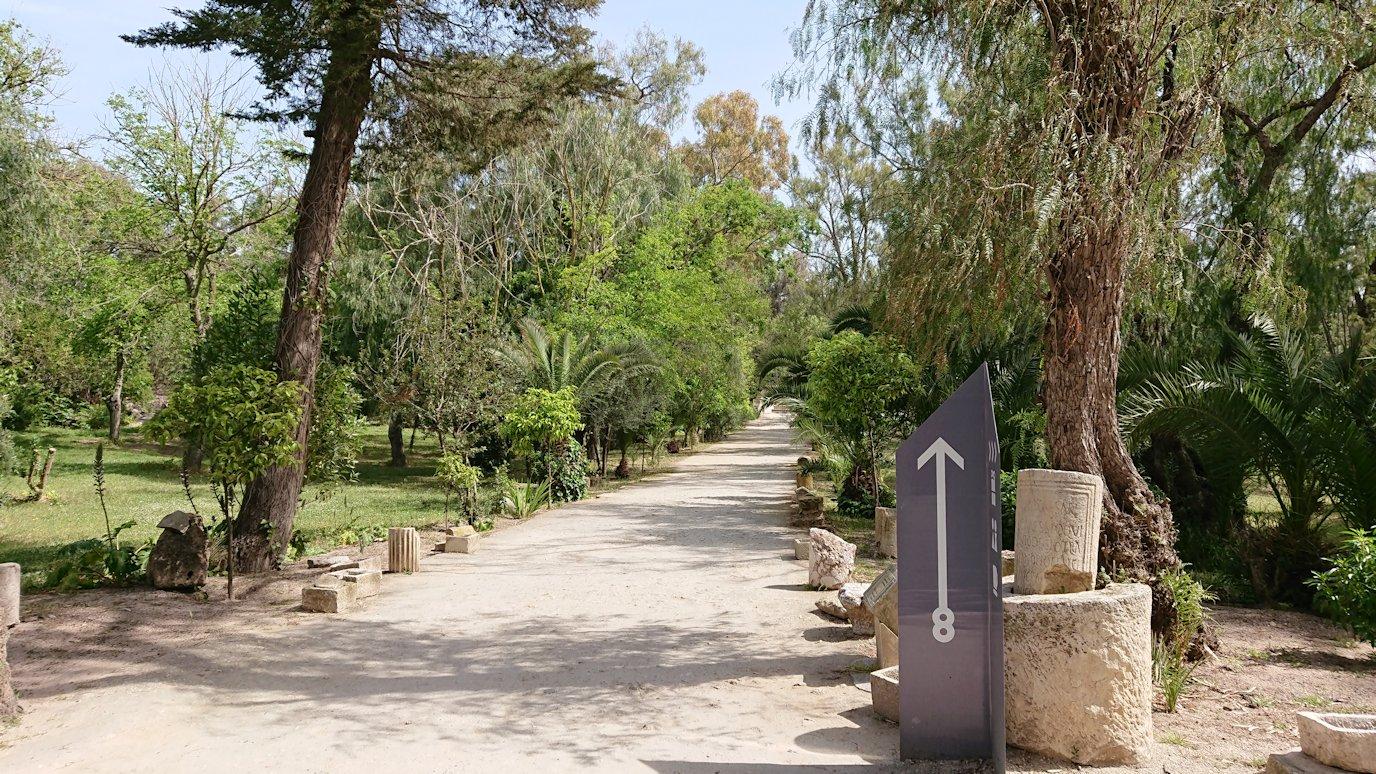 チュニジア:カルタゴ遺跡のアントニヌスの共同浴場へ向かう7