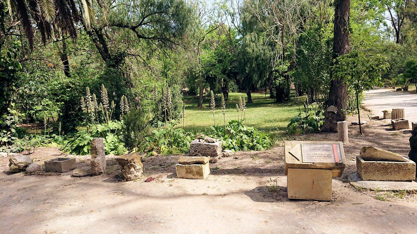 チュニジア:カルタゴ遺跡のアントニヌスの共同浴場へ向かう8