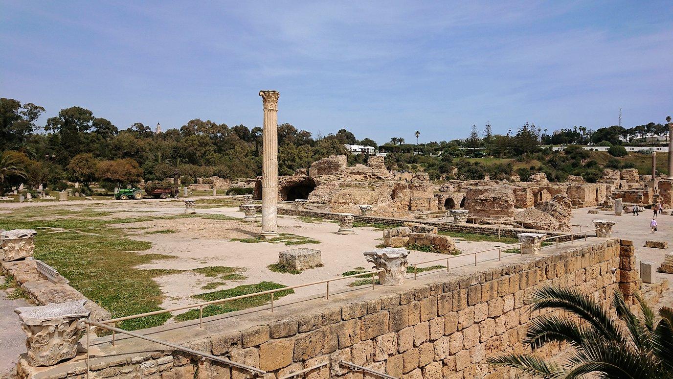 チュニジア:カルタゴ遺跡のアントニヌスの共同浴場内で最後まで粘る6
