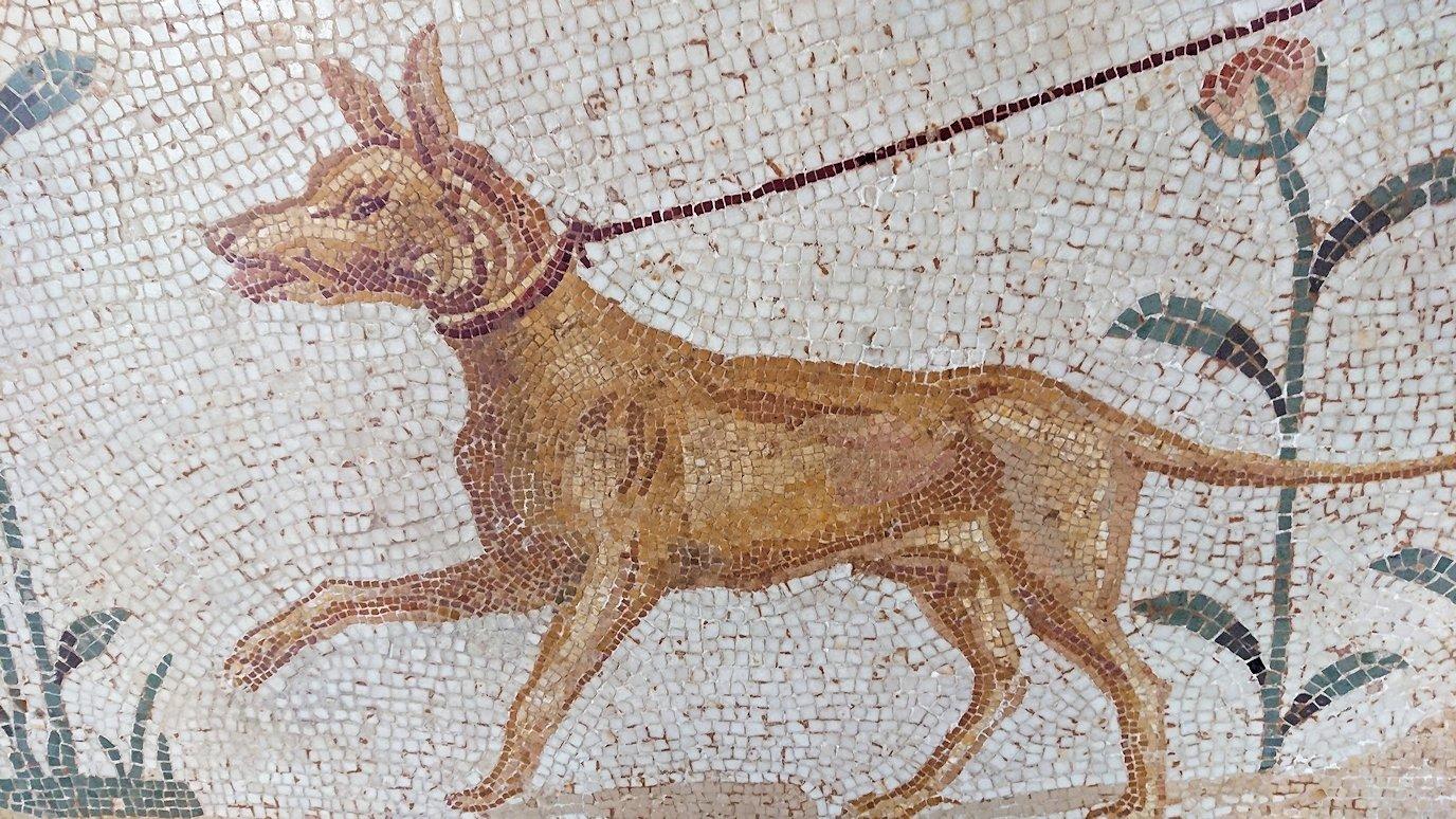 チュニスのバルドー博物館はモザイク作品で大きな作品を見学4