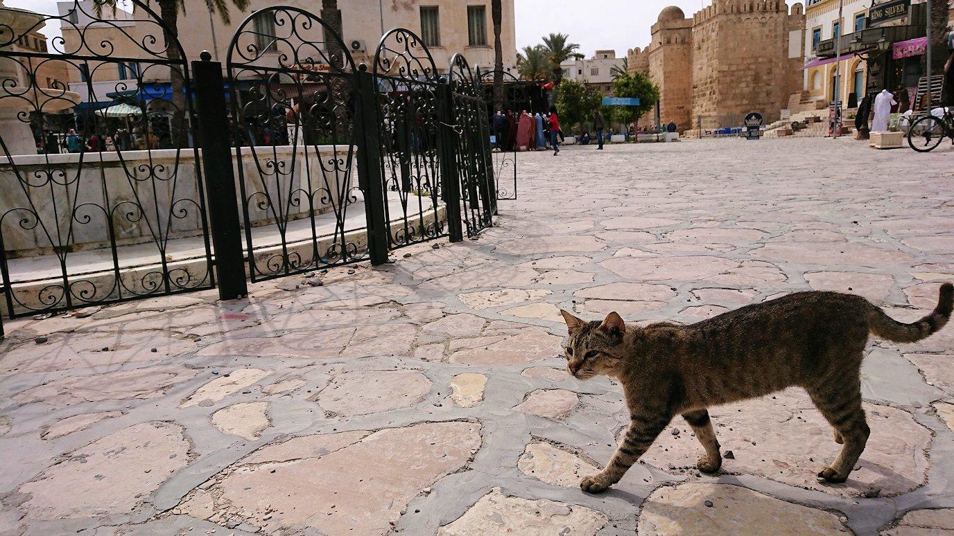 チュニジアのスースの街の旧市街を歩いていきます6