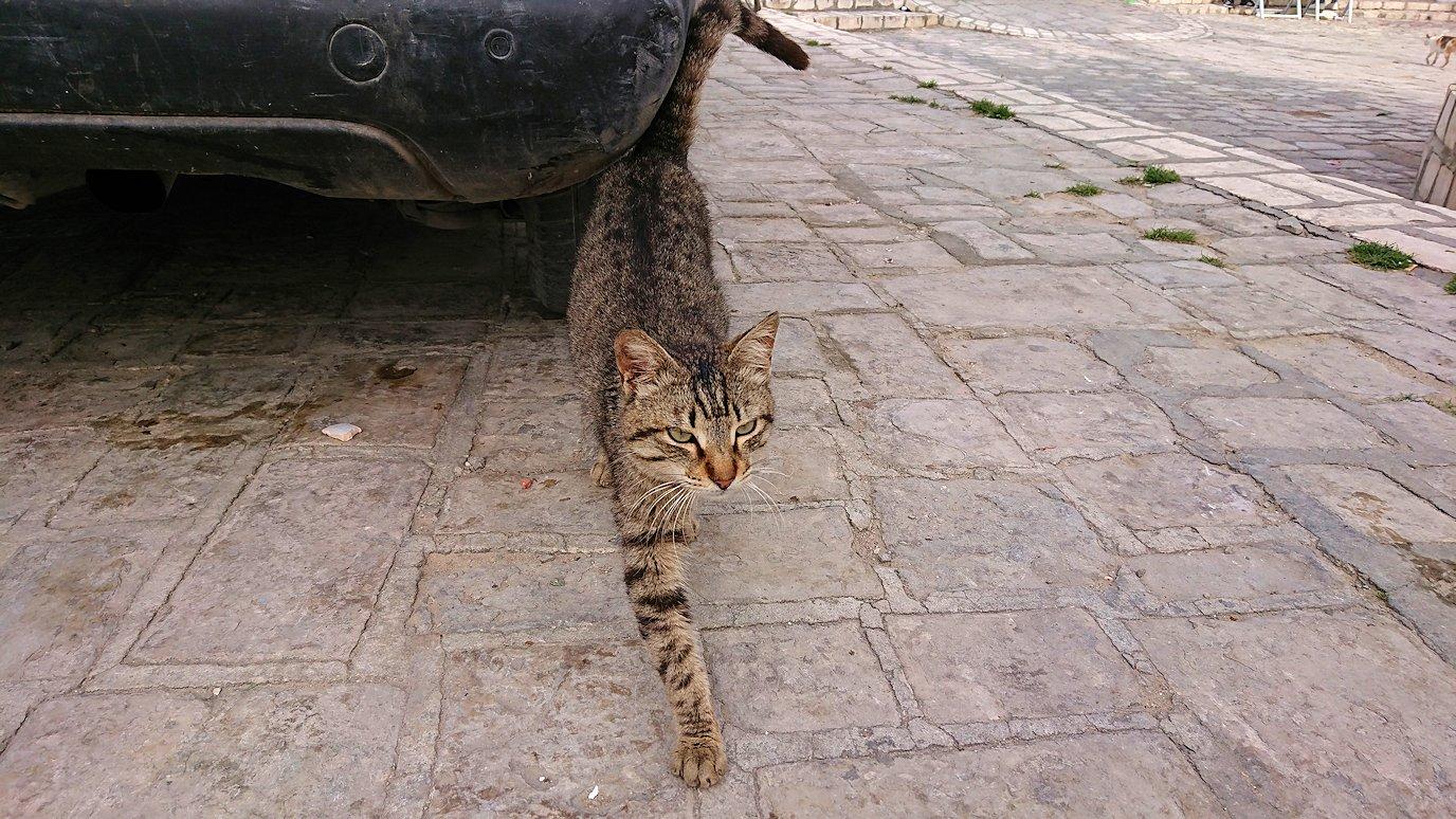 チュニジアのスースの街の旧市街で自由時間にリバトの様子9