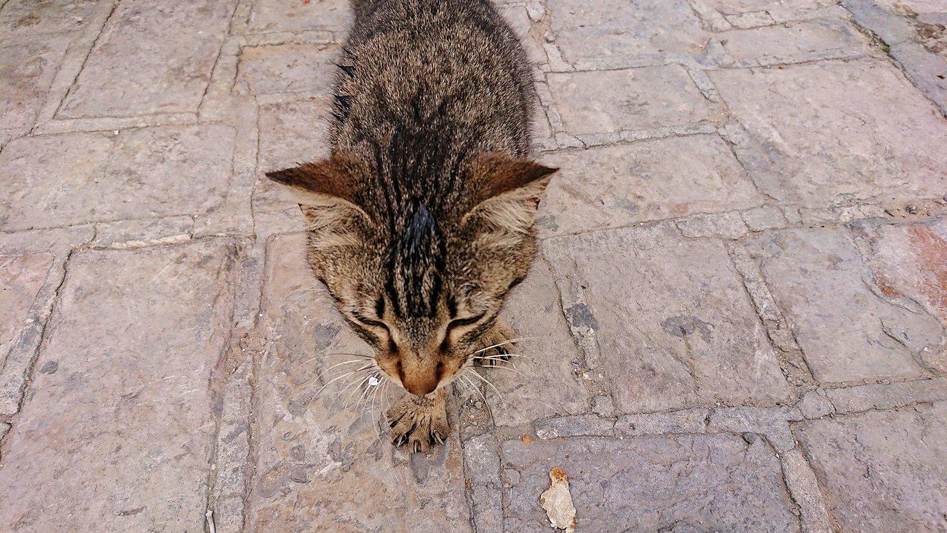 チュニジアのスースの旧市街を散策します