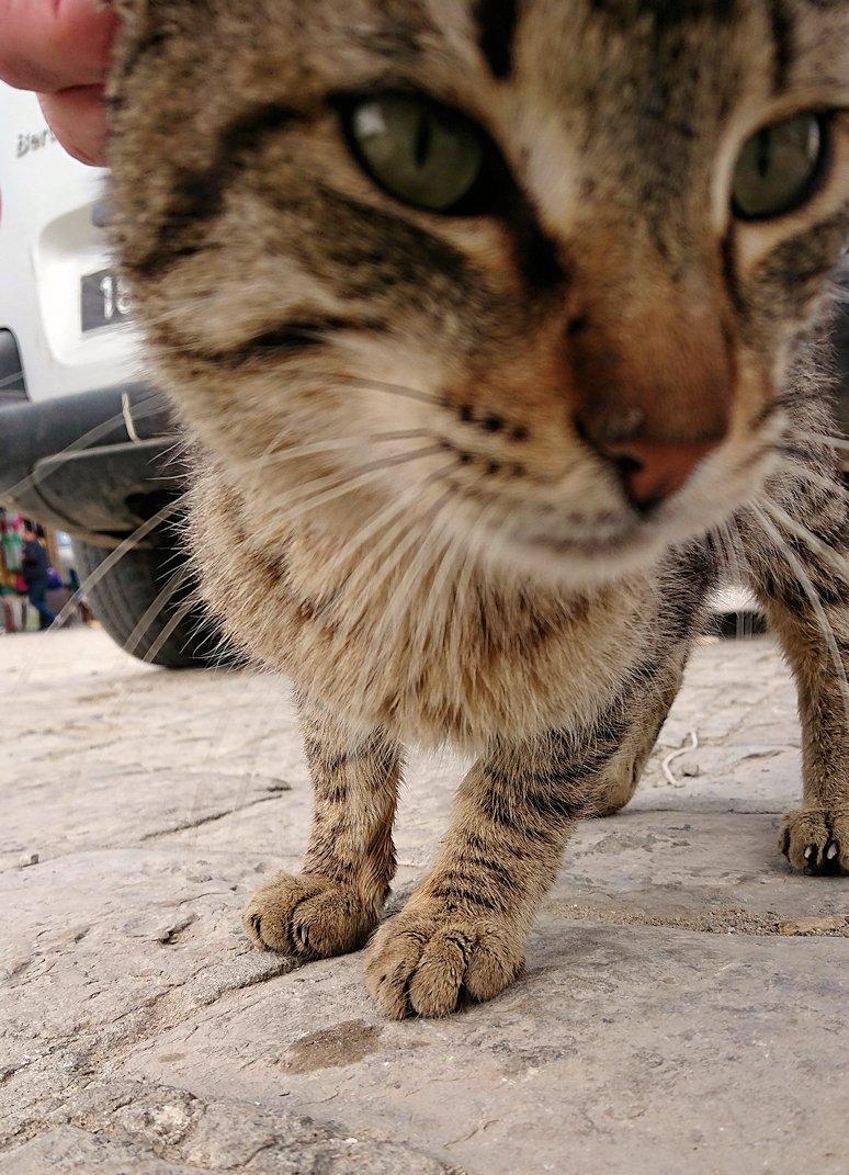 チュニジアのスースの旧市街を散策します1