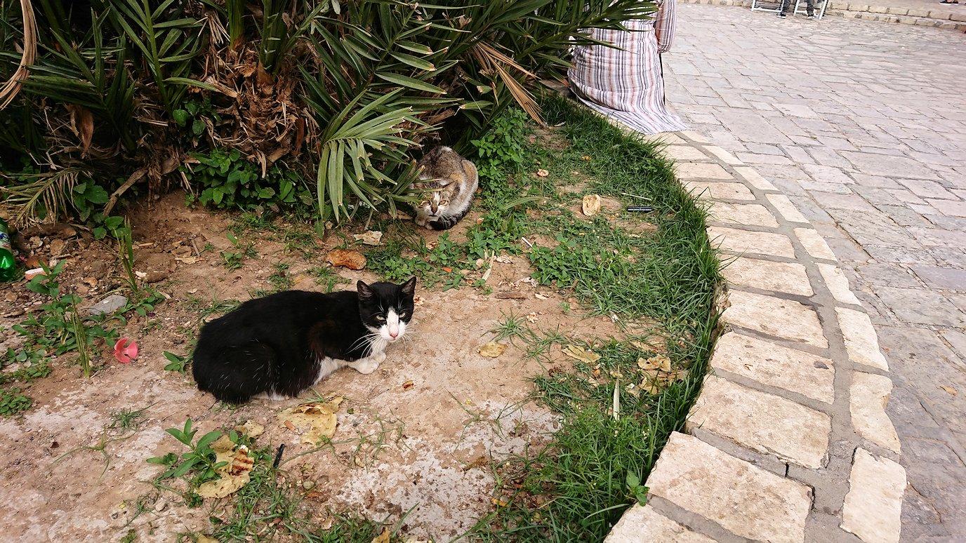 チュニジアのスースの旧市街を散策します2