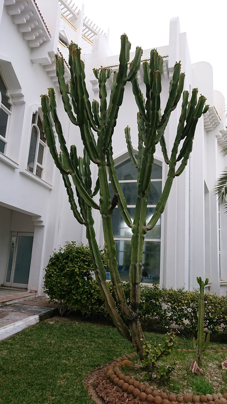 チュニジアのスースの街にある「マルハバ ロイヤル サレム」ホテルの様子を撮影9