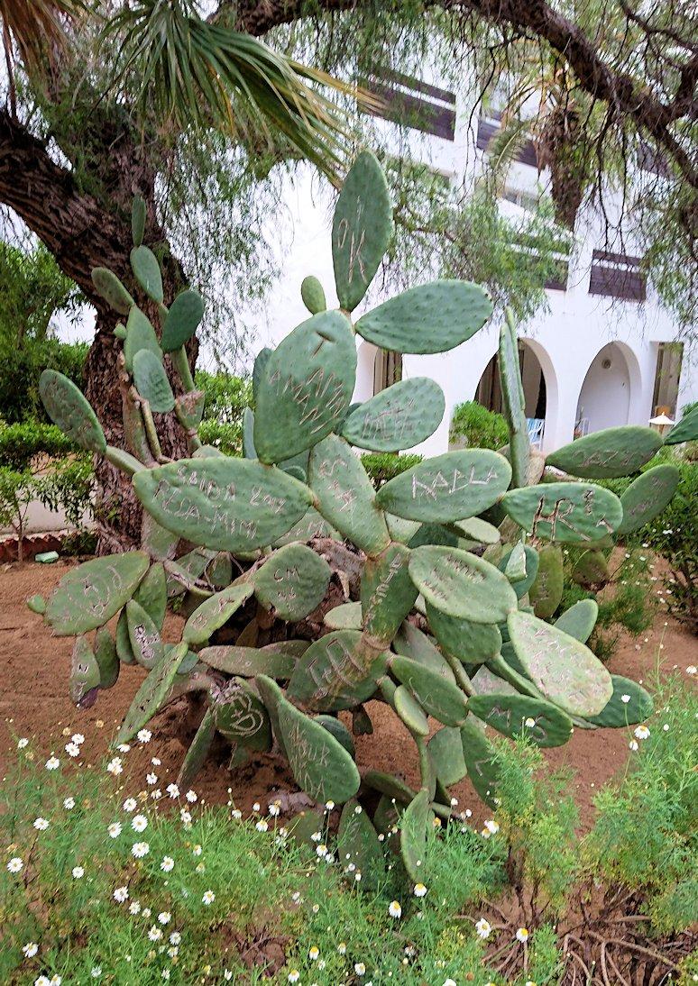 チュニジアのスースの街にある「マルハバ ロイヤル サレム」ホテル内を散策する3