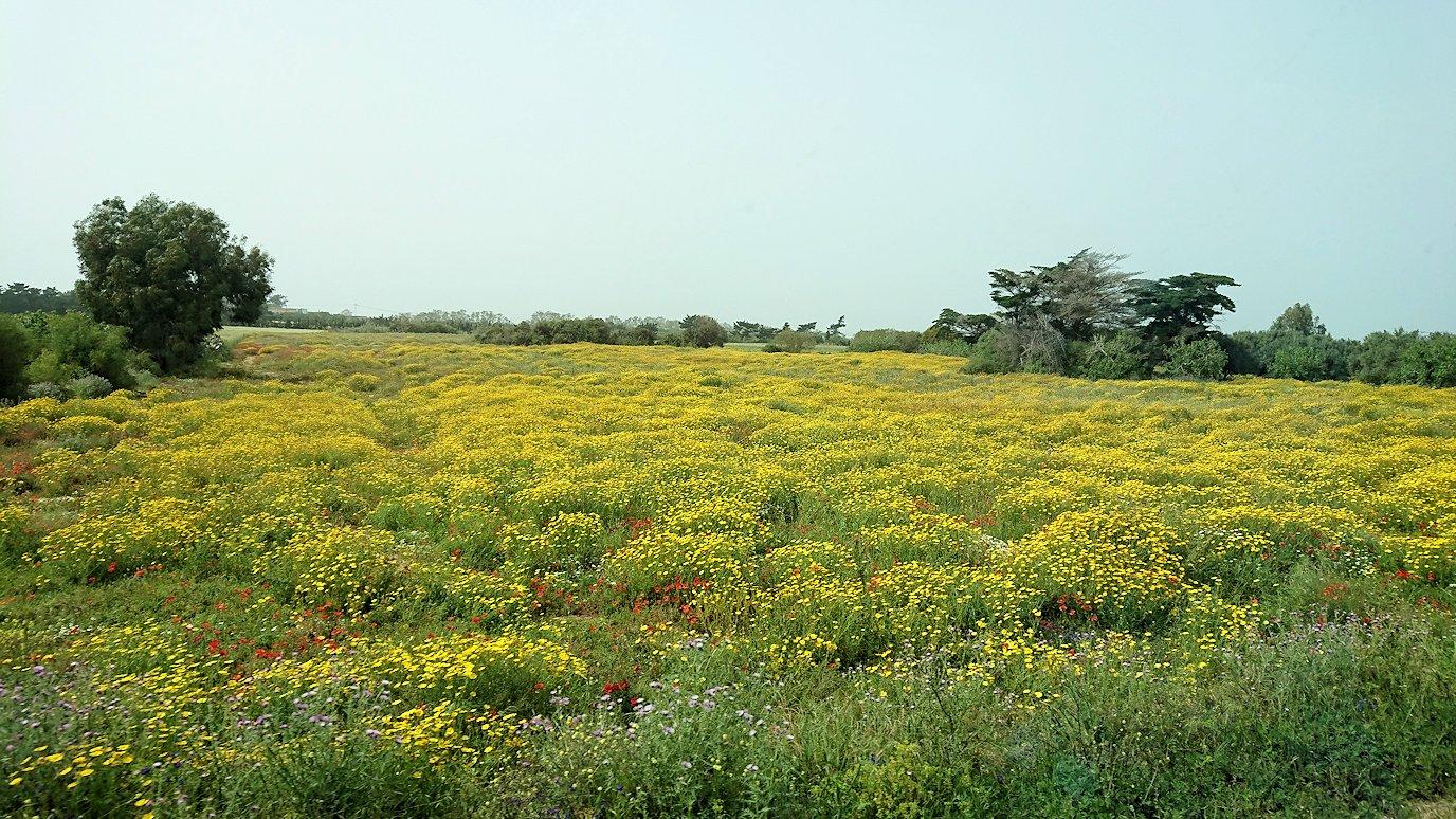 チュニジア:ボン岬からケルクアン遺跡に移動3