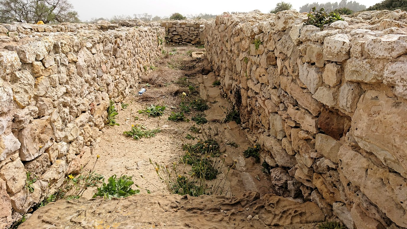 チュニジア:のケルクアン遺跡内を散策する1