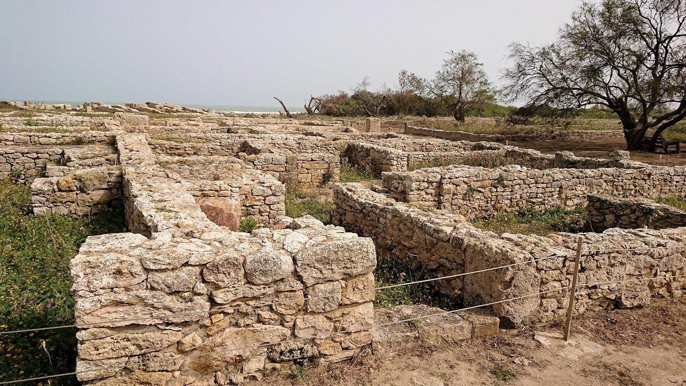 チュニジア:のケルクアン遺跡内を散策する7