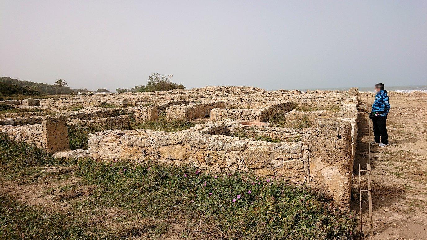 チュニジア:のケルクアン遺跡内を散策する8